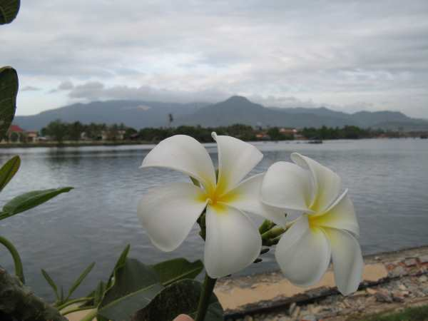 Flowers on the riverfront promenade. Kampot